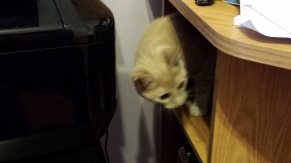 Cat Desk 2 (640x360)