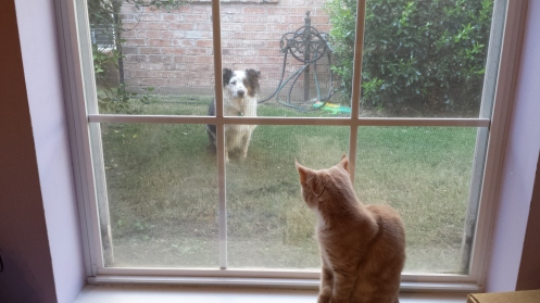 Image result for cat looking out window at a dog